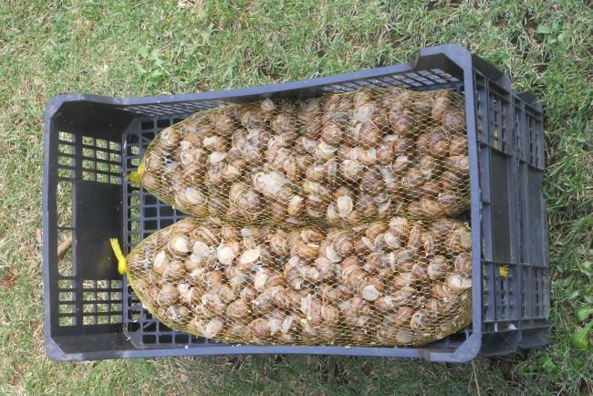Mallas de 2 Kilos de caracoles de Palencia