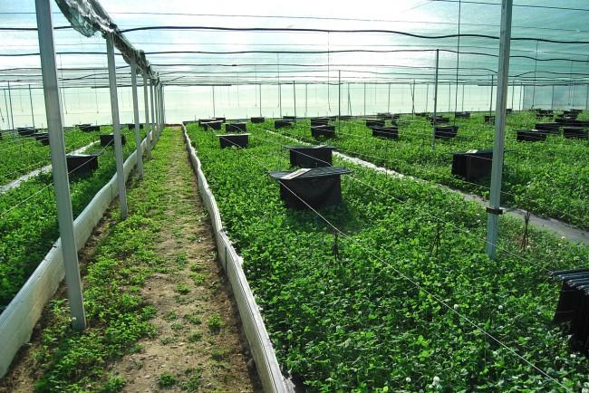 C mo es nuestra granja helixvaldavia helix valdavia for Caracol de jardin de que se alimenta