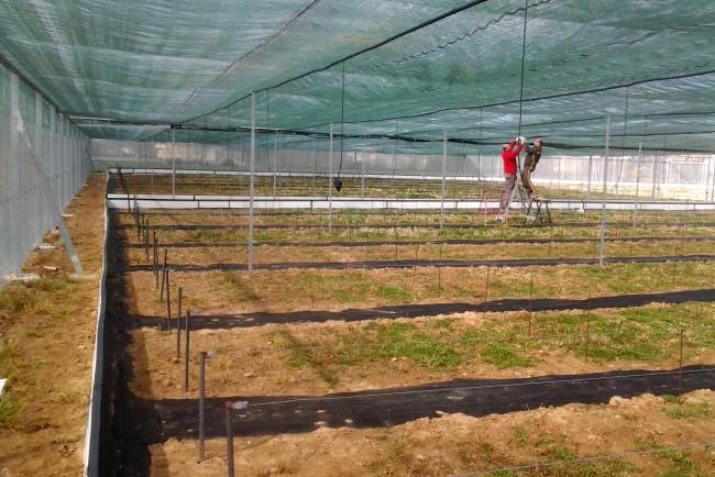 Granja de caracoles de Palencia en construcción